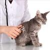 Ветеринарные клиники в Евлашево
